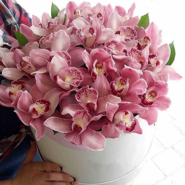 31 крупная орхидея в коробке R002