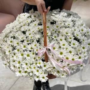 Корзина 75 веток ромашковой хризантемы с оформлением R1797