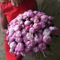75 розовых пионов с лентами R1094