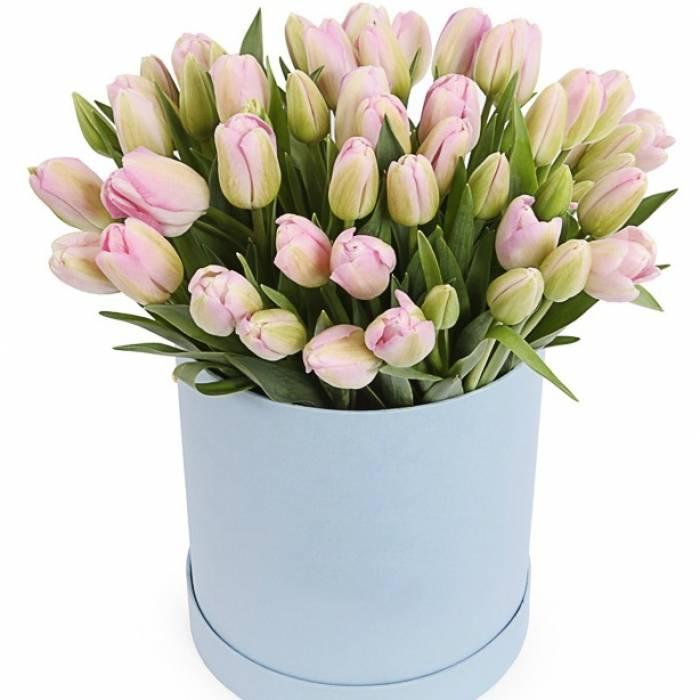 79 тюльпанов в коробке R009