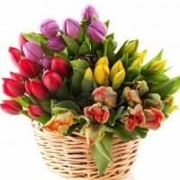 Большой букет из 51 ярких тюльпанов в корзине R008