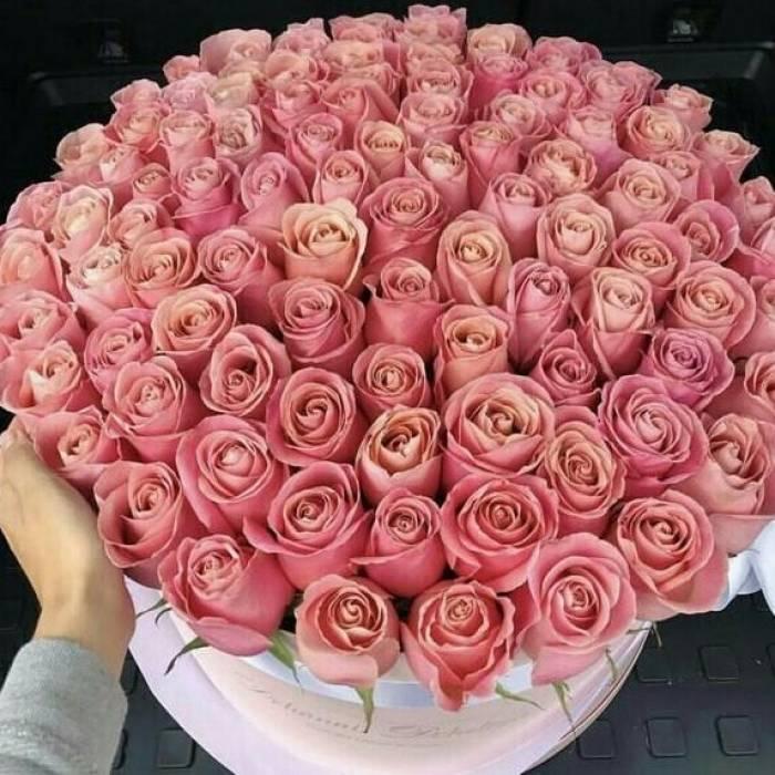 101 кремовая роза в коробке R006