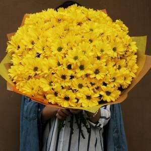 21 ветка желтых хризантем в крафте R688