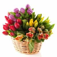 Корзина 39 ярких разноцветных тюльпанов R001