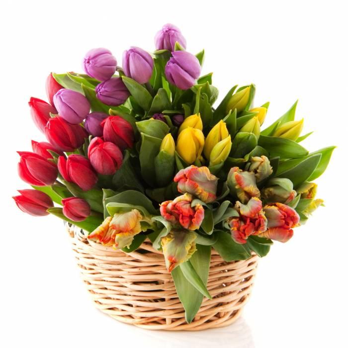 39 ярких тюльпанов ассорти в корзине R001